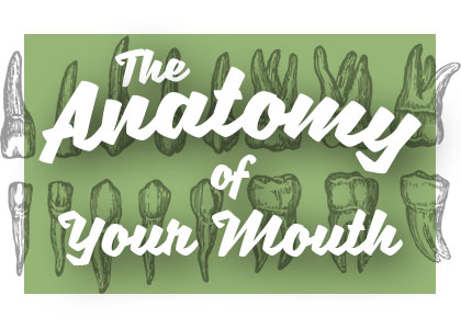 Waterville dentist, Dr. April Davis at Gracious Smiles Aesthetic General Dentistry shares all about the anatomy of your mouth and how it works together for your benefit.